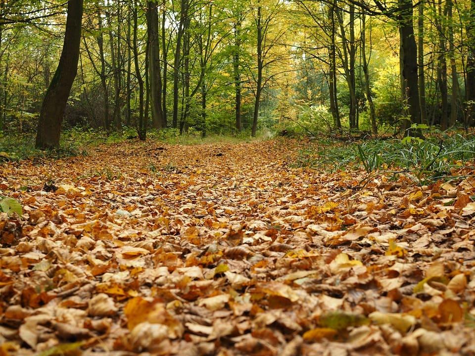Laub_auf_Waldboden